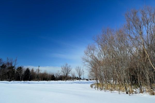 ほしみ緑地冬