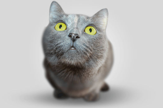 cat-002.png