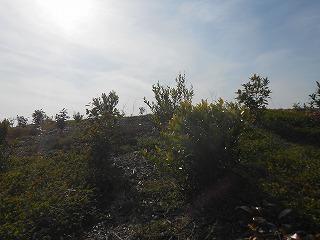 s-千年希望の丘2016.11 022