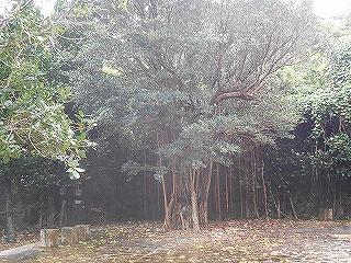 s-沖縄 2016・2 017