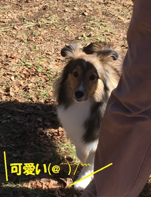 公園98つくしZ