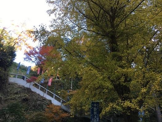 鎌倉993