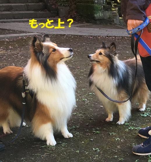 鎌倉9941