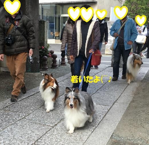 鎌倉996
