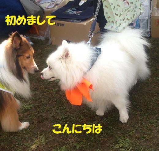 シロちゃん3