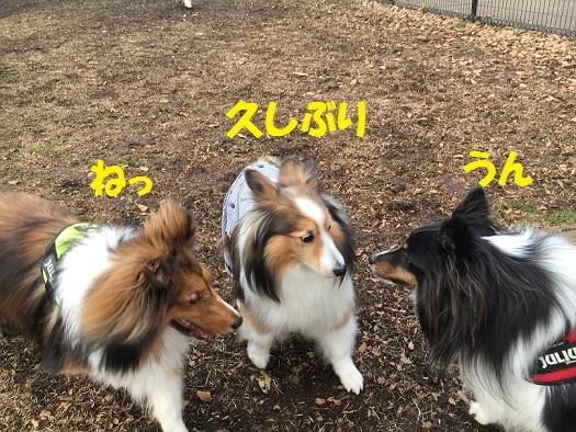 昭和6レンちゃん
