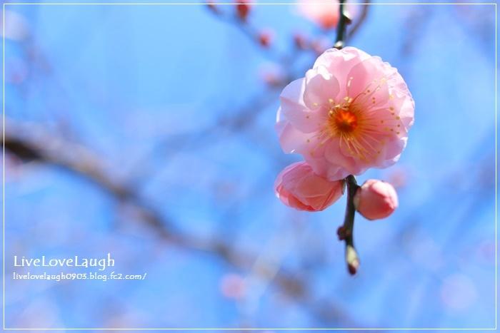 IMG_5307ぶた5