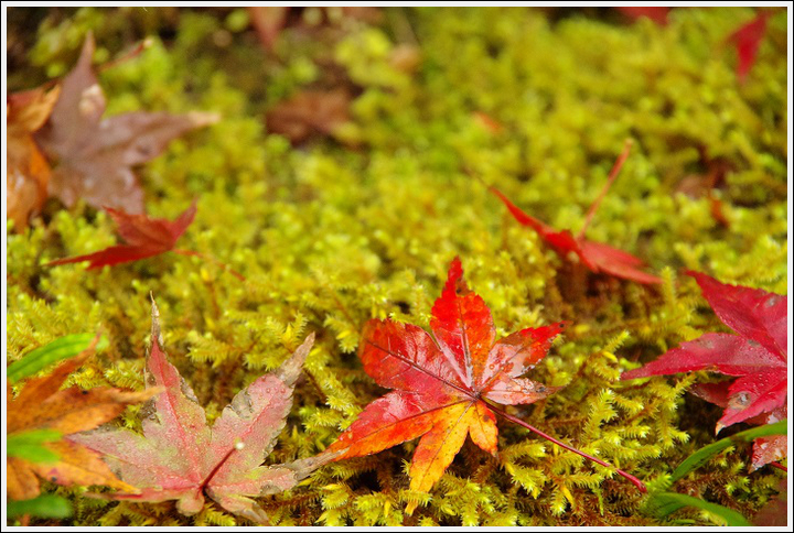 2016年11月21日 談山神社 (2)