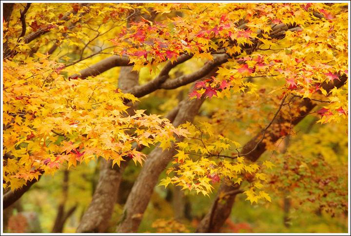2016年11月21日 談山神社 (13)