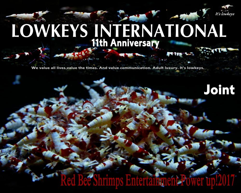 11thLOWKEYS02.jpg