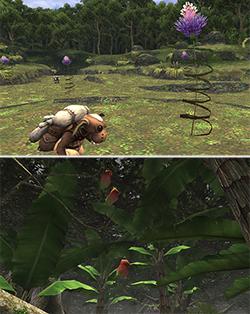 ユニークな植物も多いよね