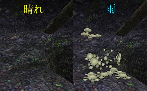 雨の日に生える菌類