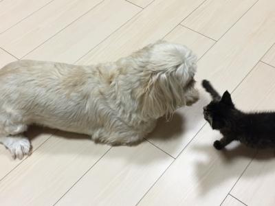 仔猫ちゃんともんち11