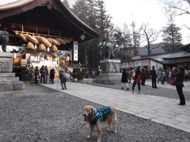 諏訪大社2017.1.3 004