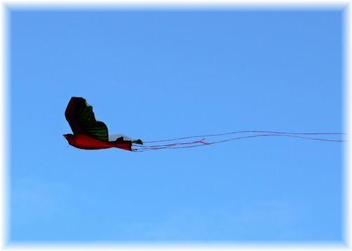 凧揚げ大会11