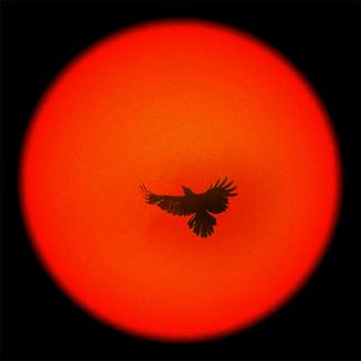 太陽カラス