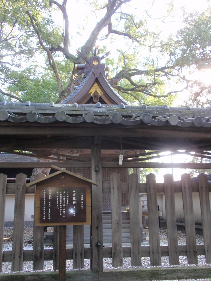 闘鶏神社6