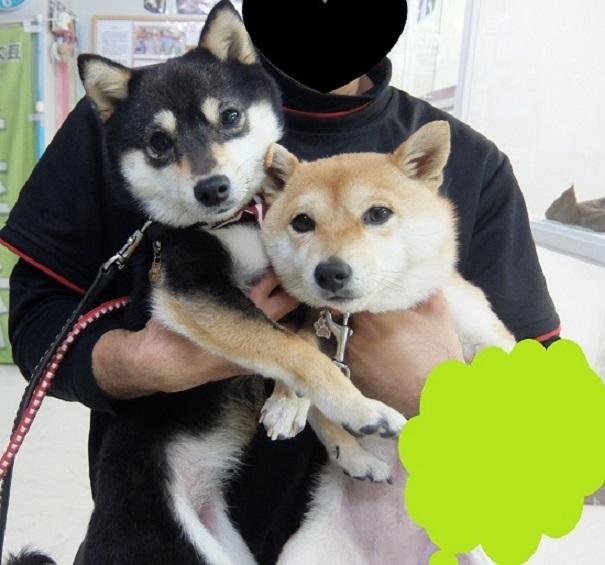 なつちゃん ふゆちゃん - コピー