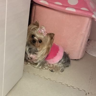 ピンク14