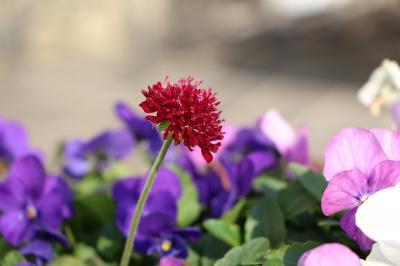 170105赤い花