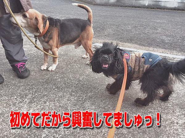 ミッキー&ひめちゃん