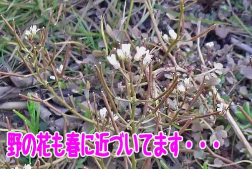野の花もはるに