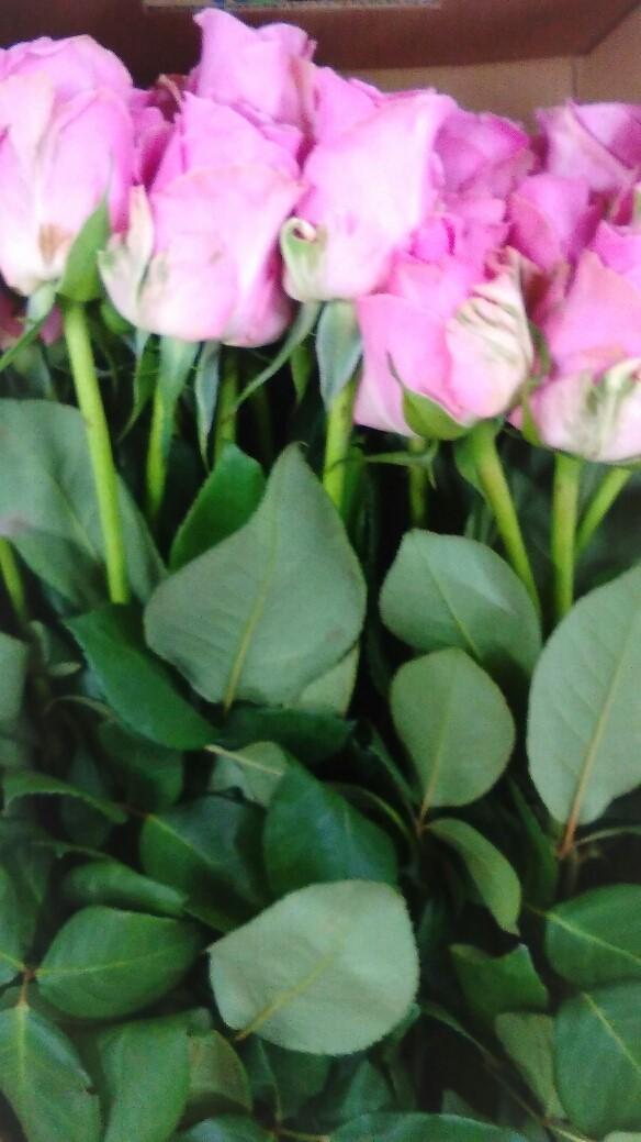 0120薔薇-1