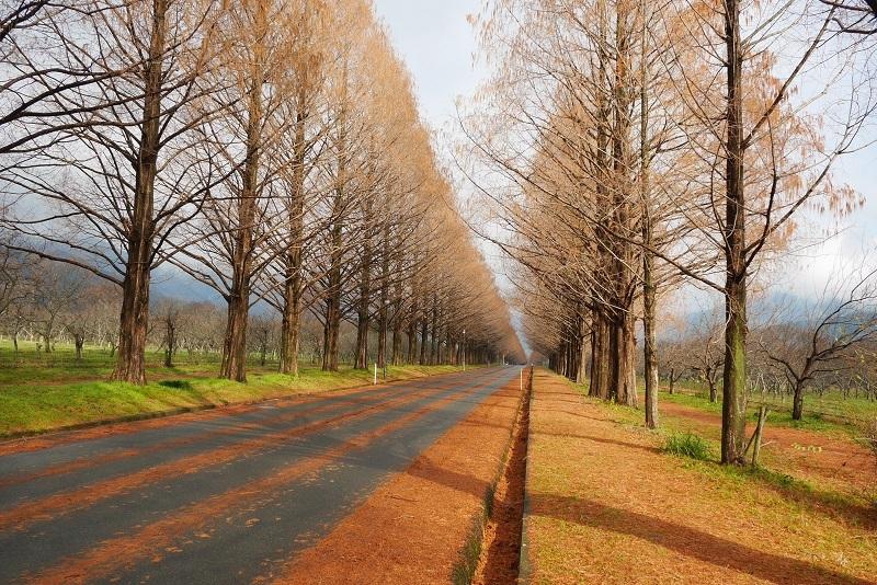 冬の福井ツーリング1612-005b