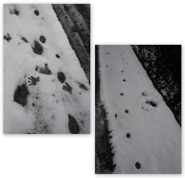 冬の福井ツーリング1612-009b