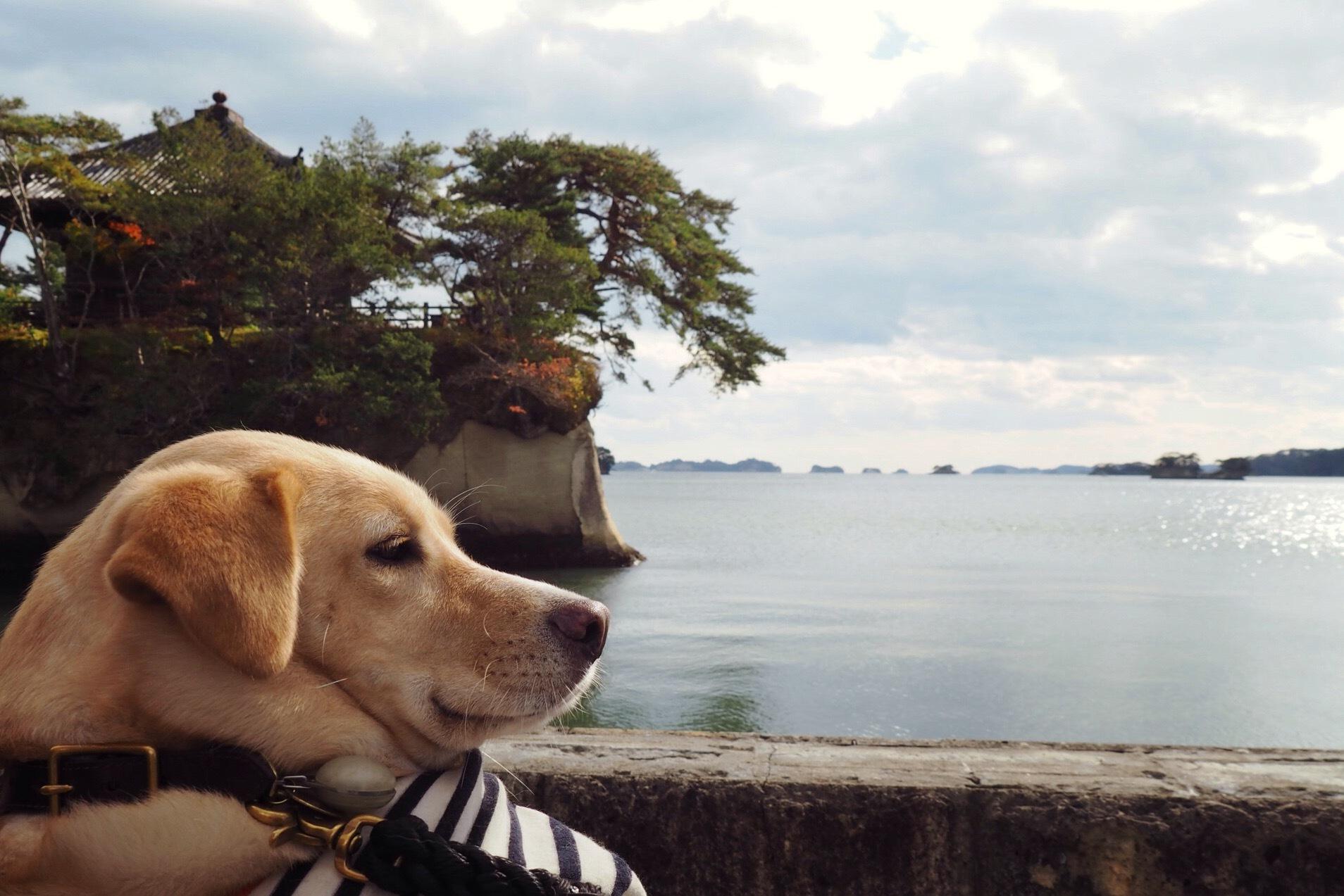 松島 犬 わんこ 大型犬