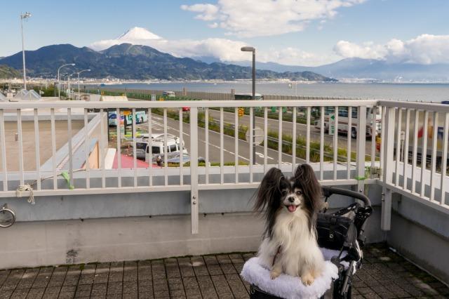 東名高速のPAで富士山見物-002