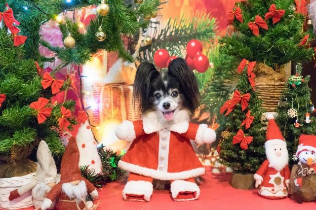 メリークリスマス♪-1