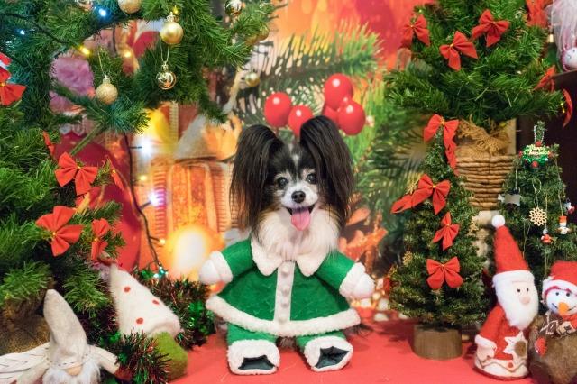 メリークリスマス♪-2