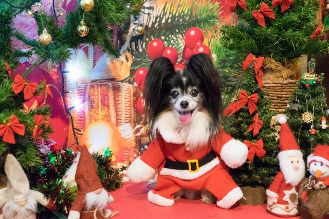 メリークリスマス♪-7