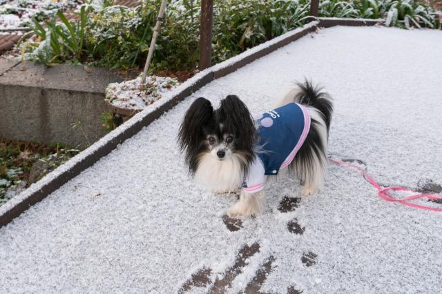 マリィ地方にも初雪♪-1