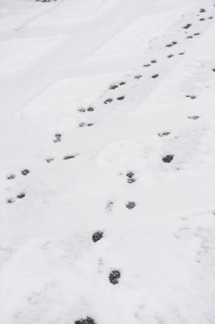 雪のち猛獣(汗)-005