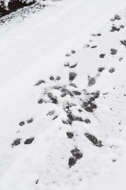 雪のち猛獣(汗)-006