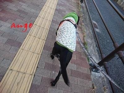 20161117ange2.jpg