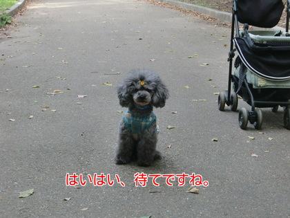 4uLAV6X2tOYmku91480509016_1480509146.jpg