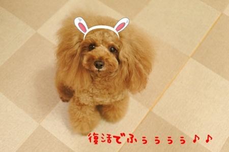 DSC_6808.jpg