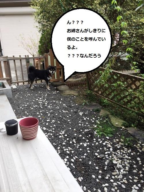 まるちゃん2016112401
