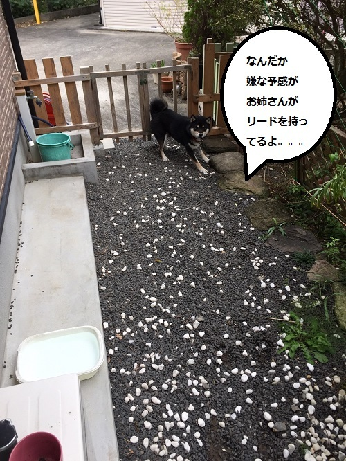 まるちゃん2016112402