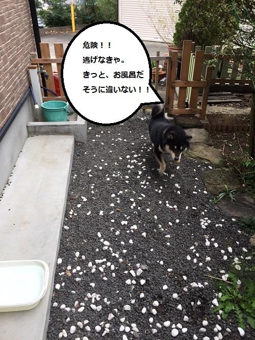 まるちゃん2016112403