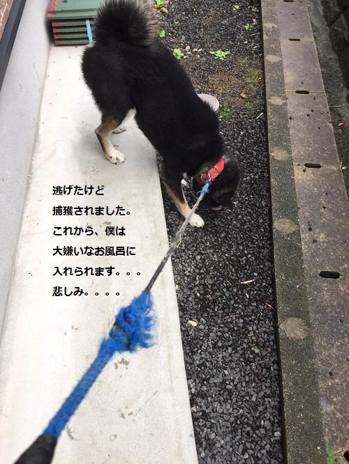 まるちゃん2016112406