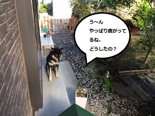 まるちゃん2016112501