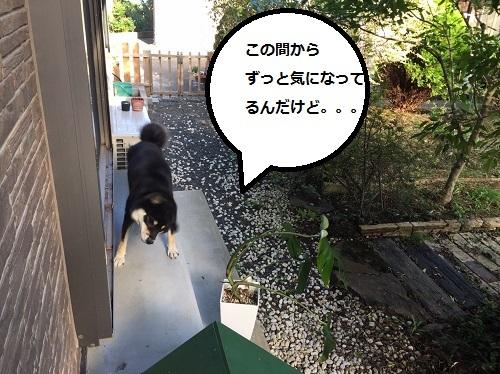 まるちゃん2016112502