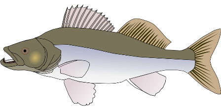 perch-29385_960_720.png