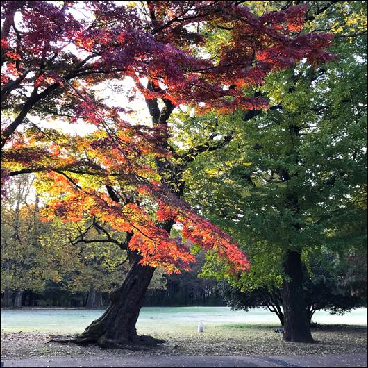 野川公園 紅葉 1