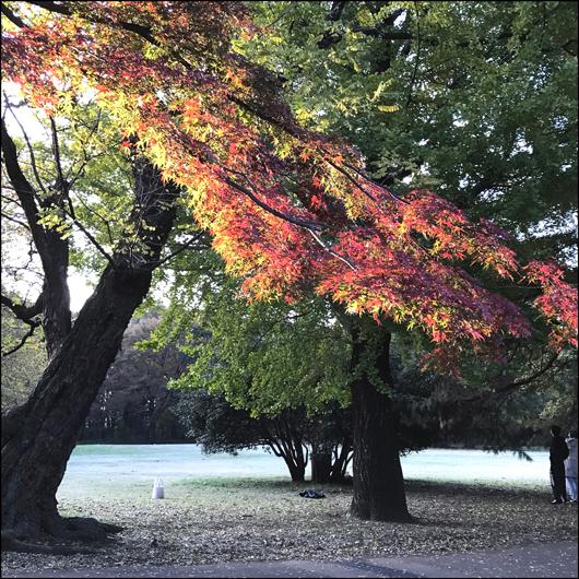 野川公園 紅葉 2