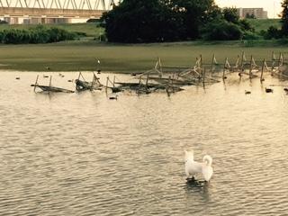 保護前日の水辺